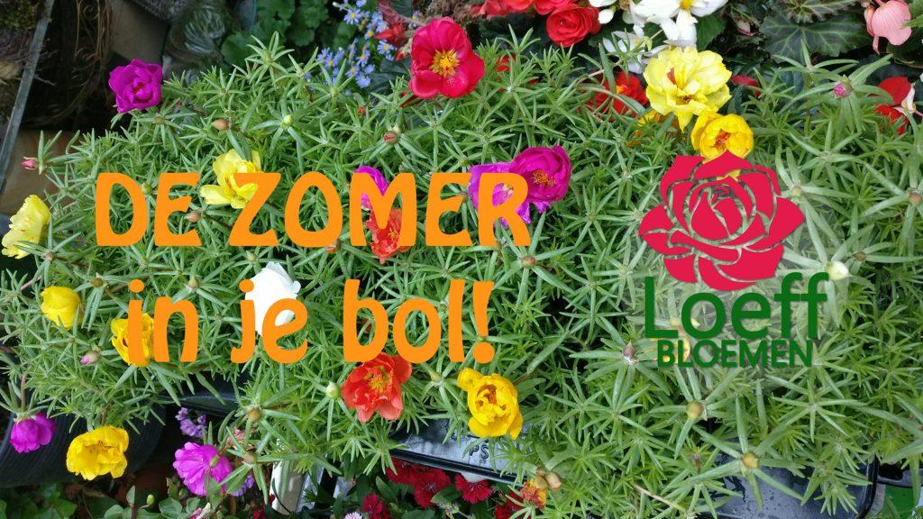 Loeff Zomer 2017