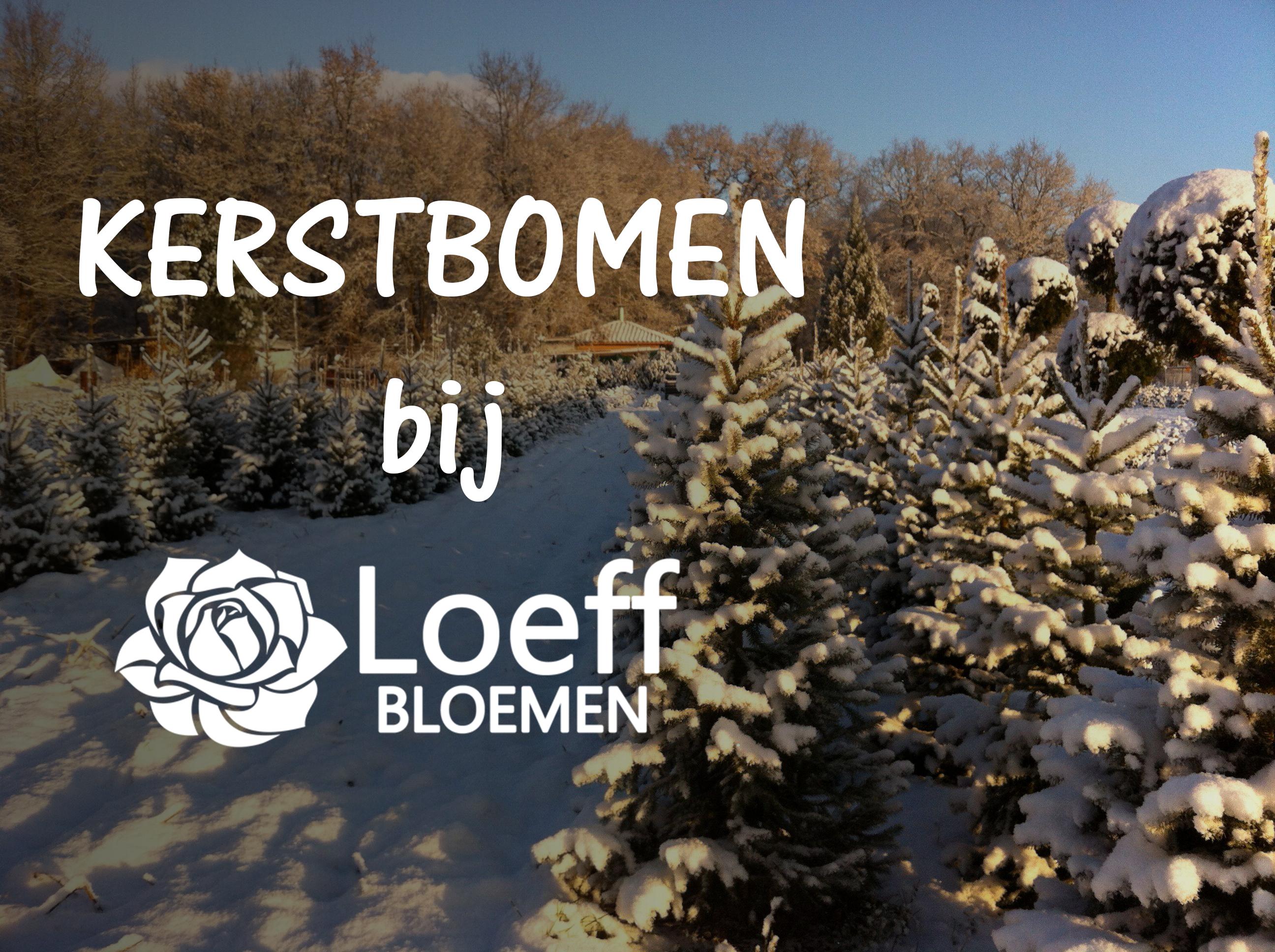 Kerstbomen_2017